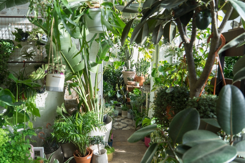 urban-jungle-bloggers-conservatory-archives-04