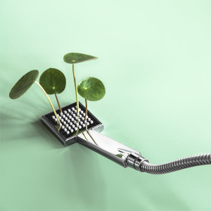 Pilea Shower